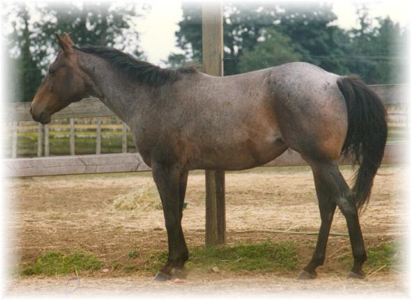 if you click on the mares picture you will see her pedigree